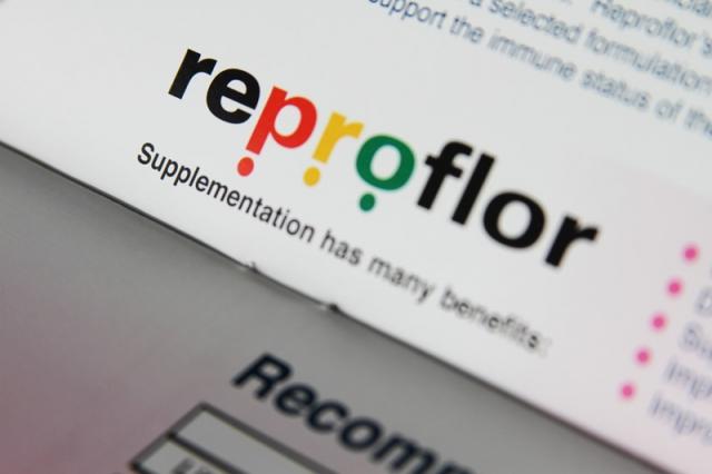 Reproflor Brochure & Logo Design
