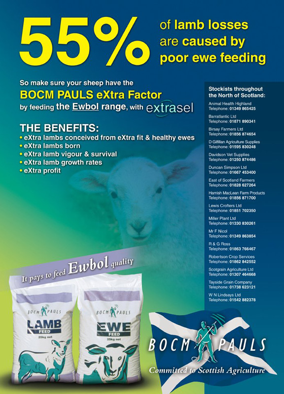 Scottish Sheep Advert